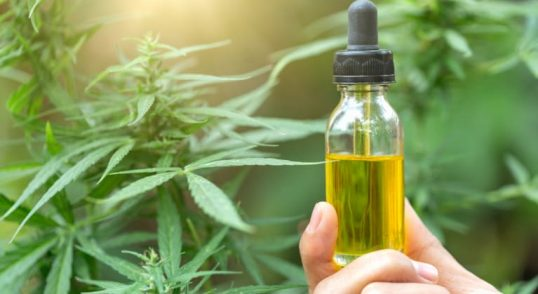 How to Get CBD Oil?